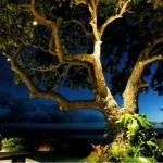 Landscape Tree Lighting