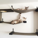 Wall Mounted Cat Shelves