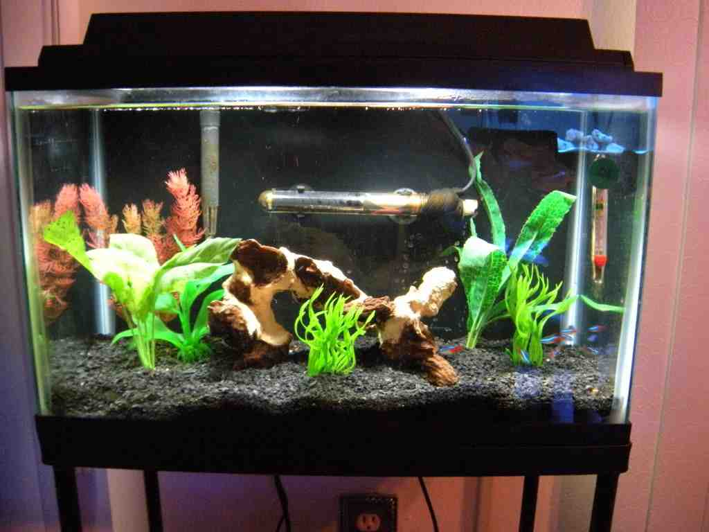 Aquarium decor ideas decor ideasdecor ideas for Betta fish tank ideas