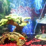 Asian Fish Tank Decorations