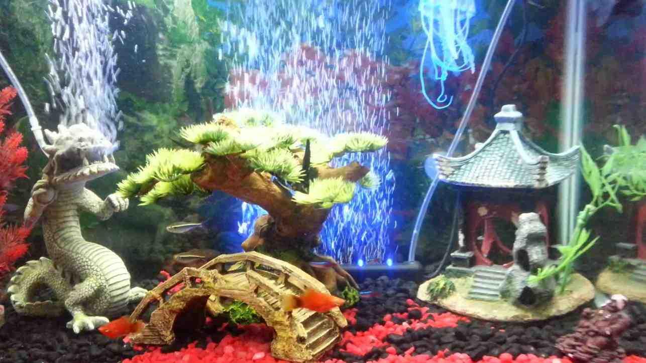 Asian fish tank decorations decor ideasdecor ideas for Japanese fish decoration