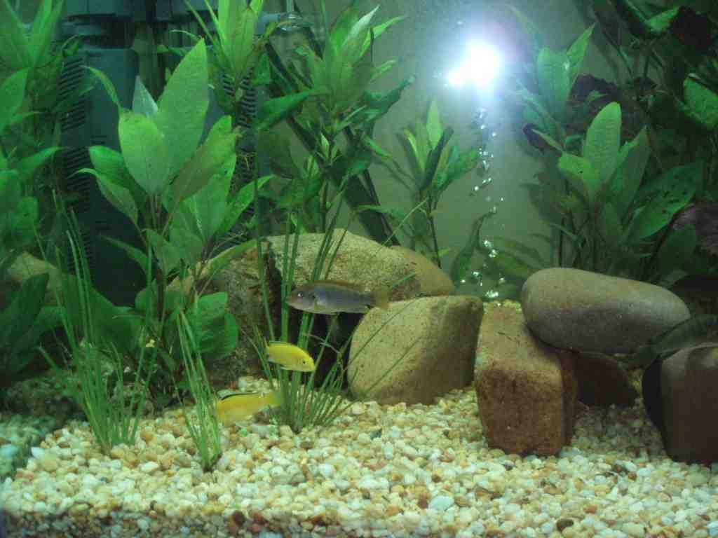 Cheap aquarium decorations decor ideasdecor ideas for Aquarium decoration online