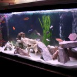 Cichlid Aquarium Decorations