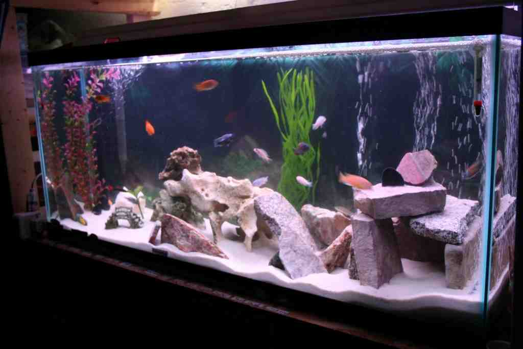 Cichlid aquarium decorations decor ideasdecor ideas - Aquarium mural deco ...