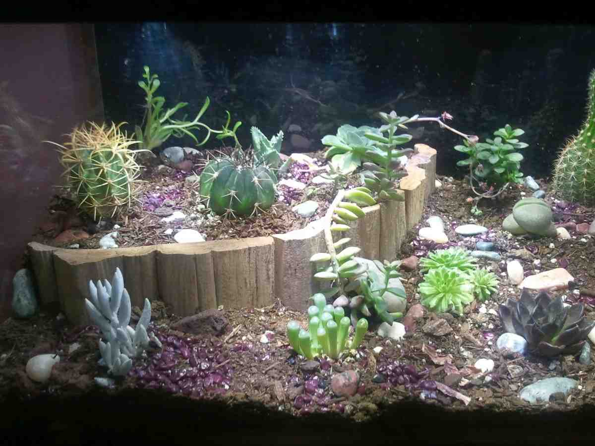 Custom aquarium decorations decor ideasdecor ideas for Aquarium decoration idea