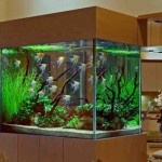 Discount Aquarium Decorations