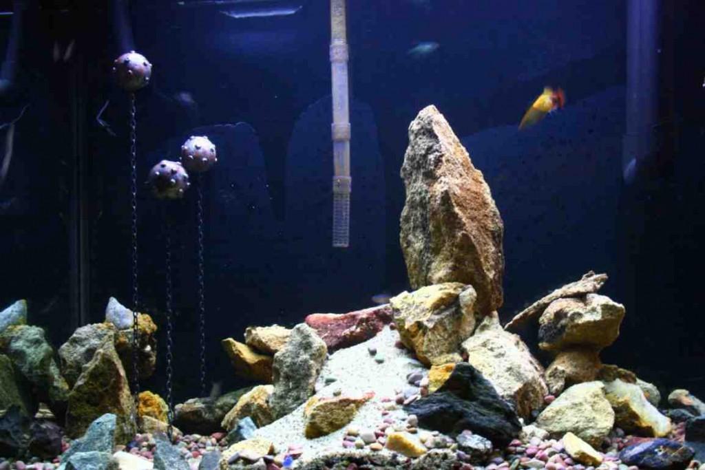 Floating Aquarium Decorations