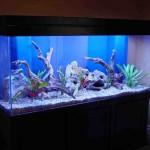 Freshwater Aquarium Decoration Ideas