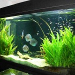 Freshwater Aquarium Decorations