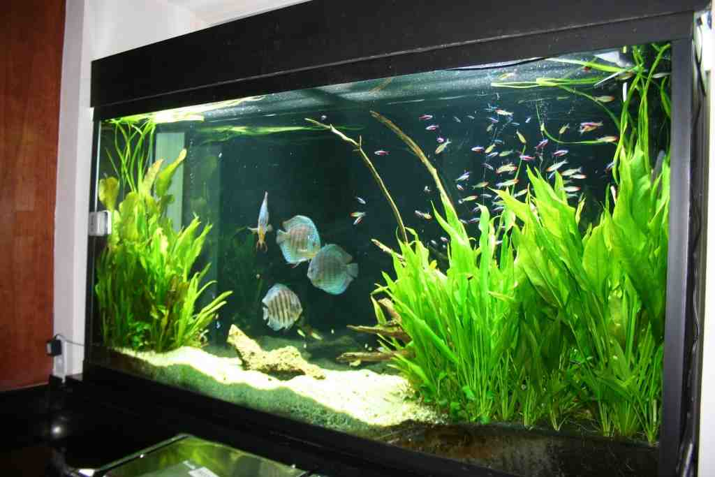Freshwater aquarium design ideas for Aquarium house decoration