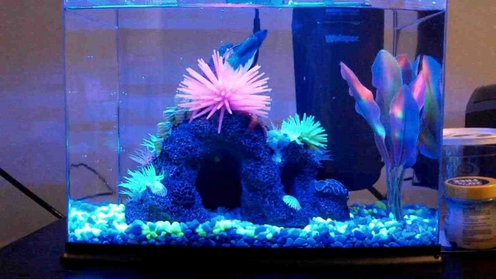 Glofish Aquarium Decorations - Decor IdeasDecor Ideas