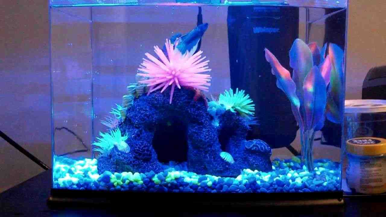 Glofish aquarium decorations decor ideasdecor ideas for Tall fish tank decorations