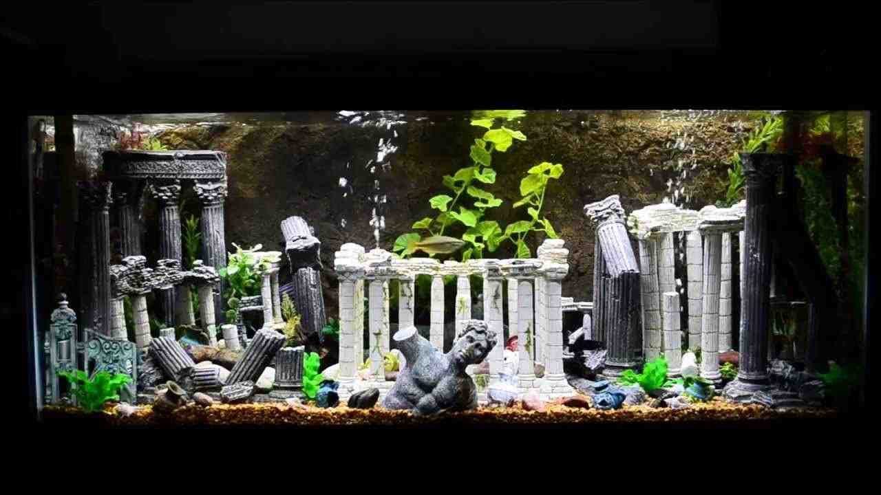 Roman aquarium decorations decor ideasdecor ideas for 55 gallon aquarium decoration ideas