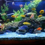 Saltwater Aquarium Decor