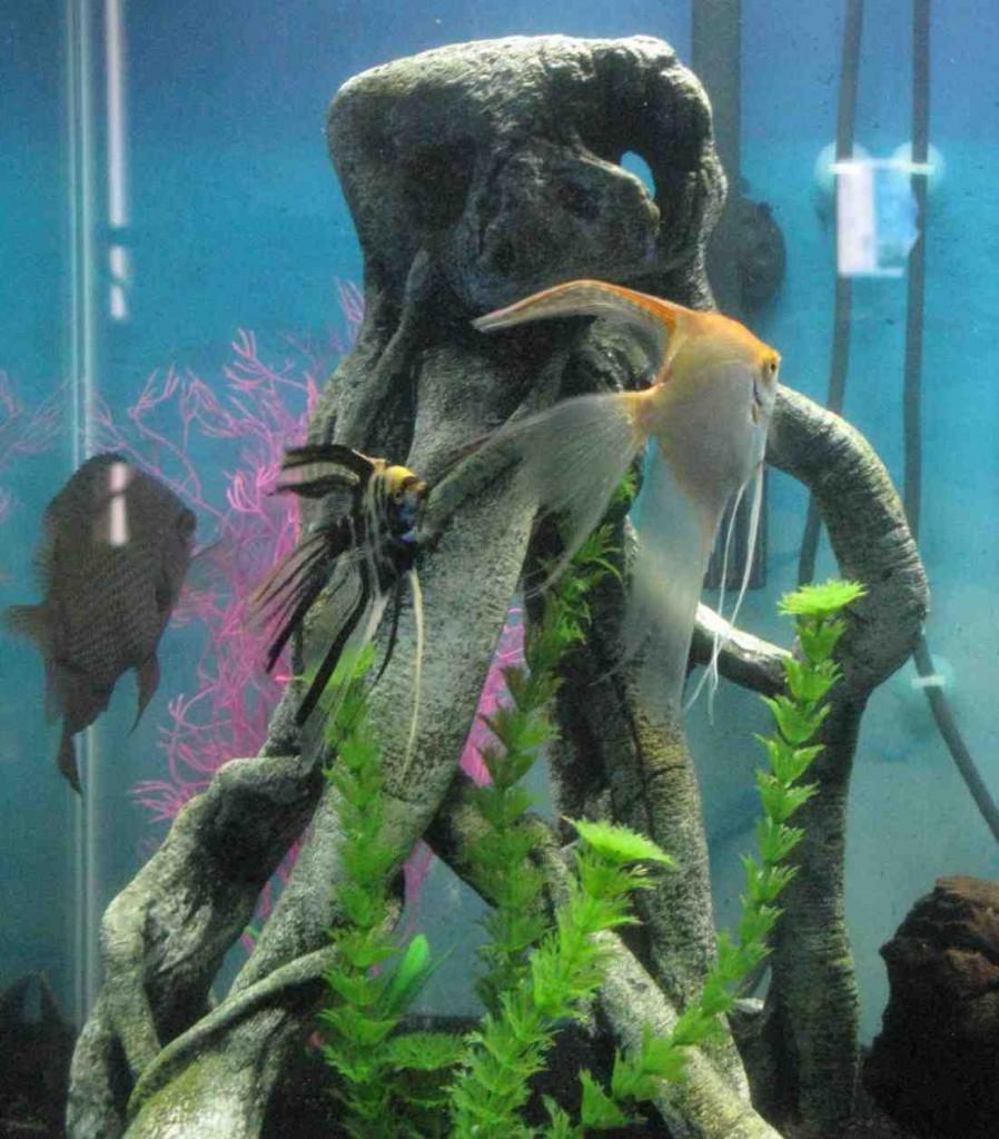 Top Fin Aquarium Decorations Decor Ideasdecor Ideas