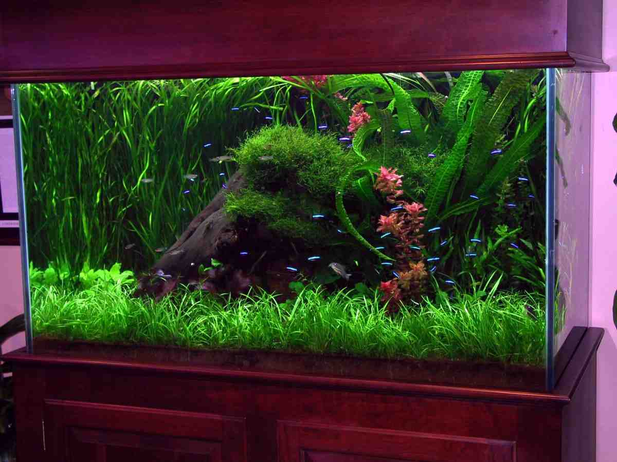 Unique aquarium decor decor ideasdecor ideas for Aquarium wood decoration