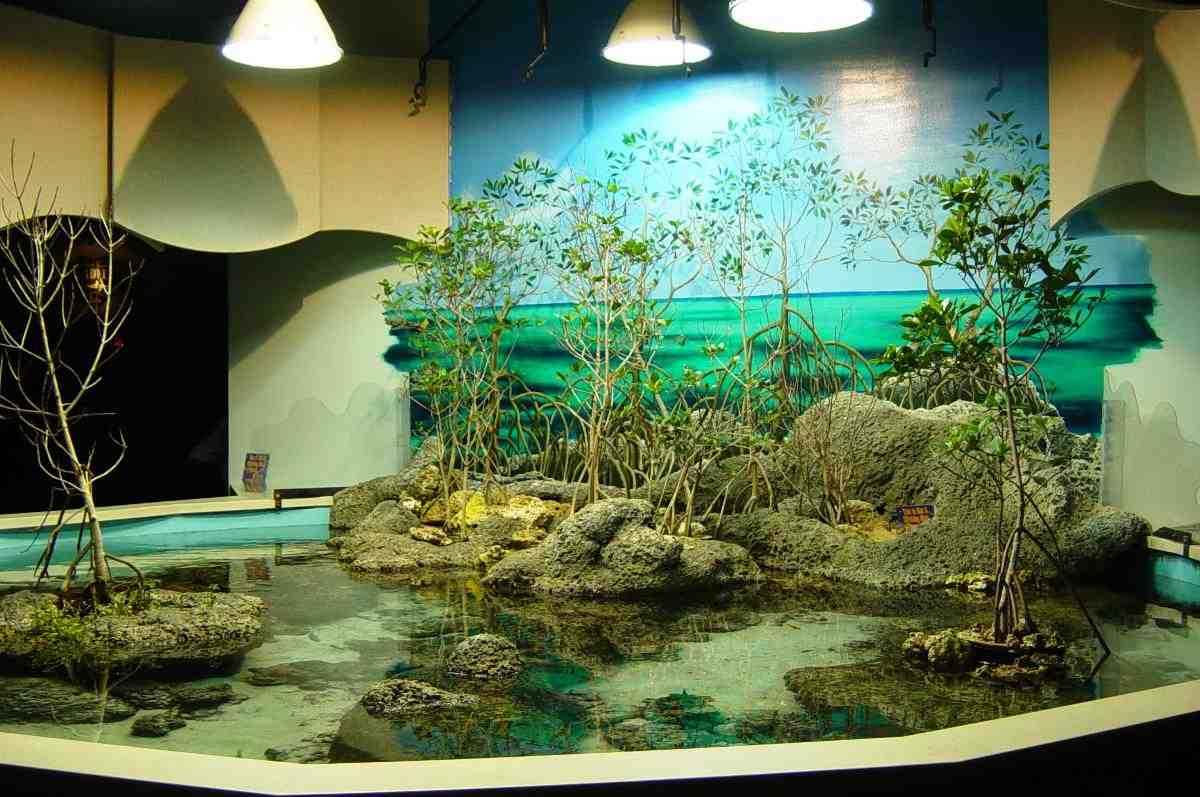 Aquarium decor 5 popular styles for fish tanks decor for Fish tank bedroom ideas