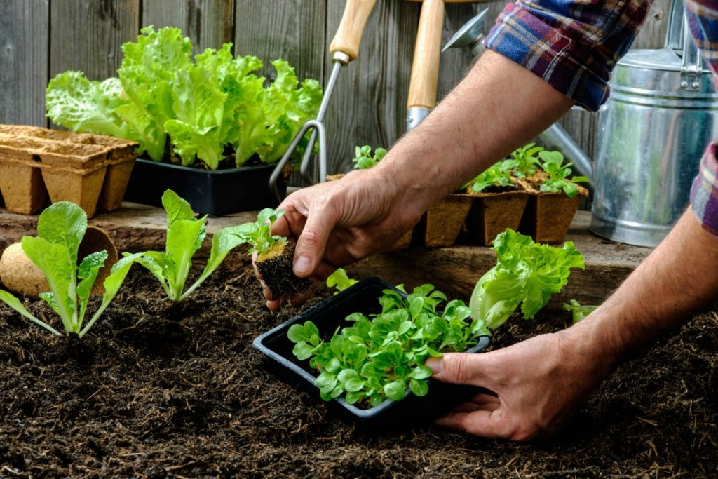 A Beginner's Guide To Container Vegetable Gardening