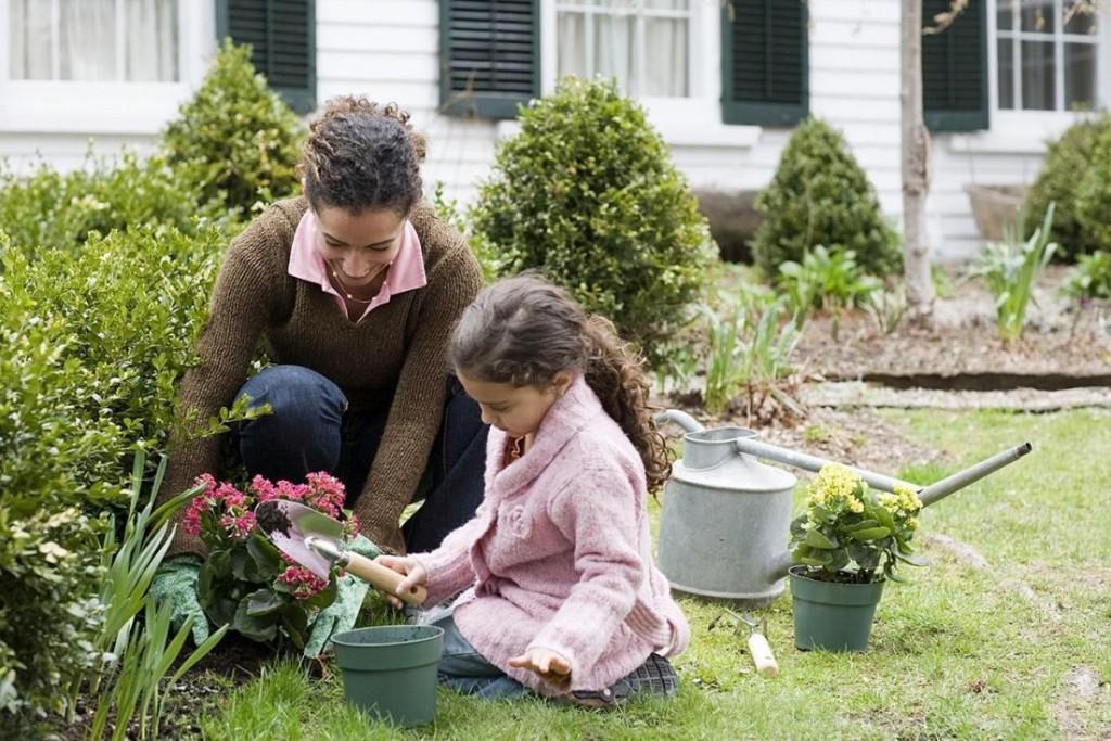 Gardening Basics How To Start A Garden