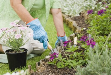 How To Start Your Flower Garden