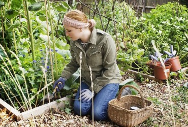 How To Start An Organic Garden