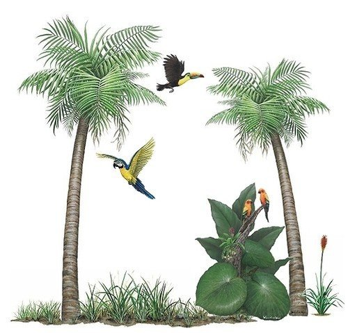 Walls Of The Wild Palm Tree Tropical Bird Sticker Murals Collection Wall