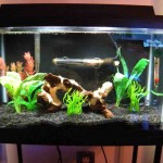Aquarium Decor Ideas
