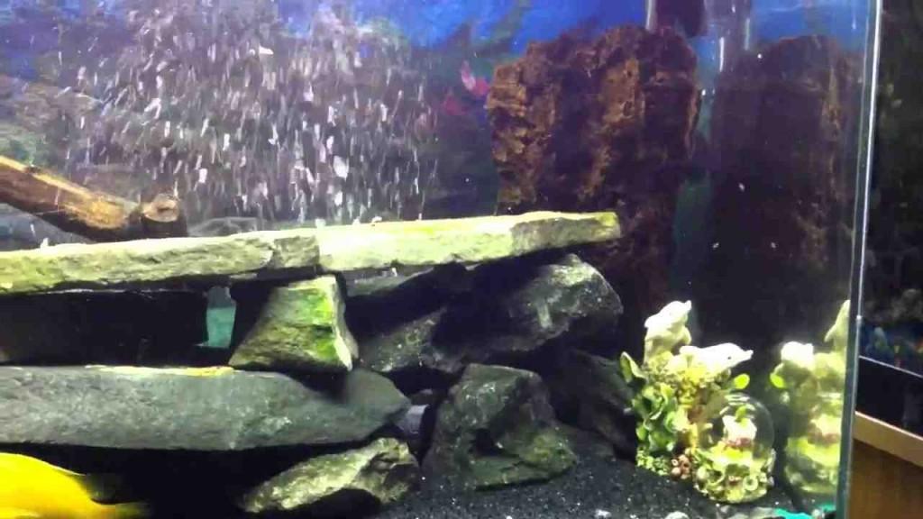 Aquarium Rock Decor
