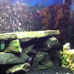 Aquarium Rock Decor