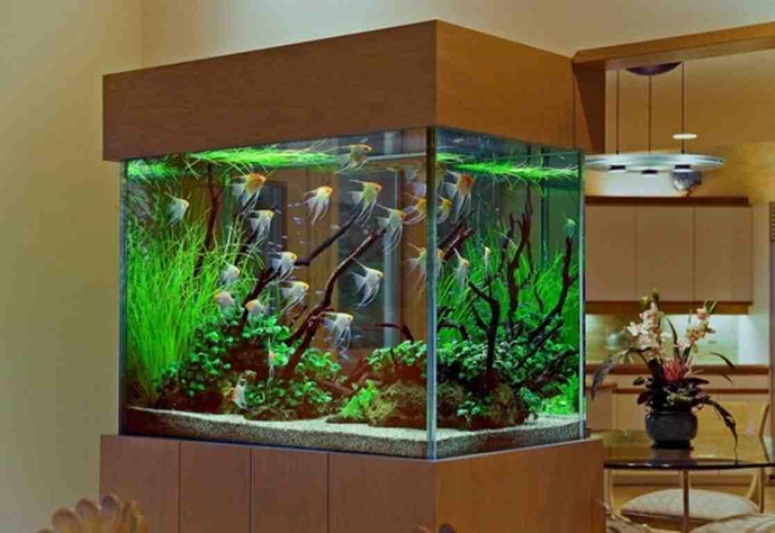 Discount Aquarium Decorations Decor Ideasdecor Ideas