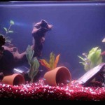 Fish Aquarium Decor