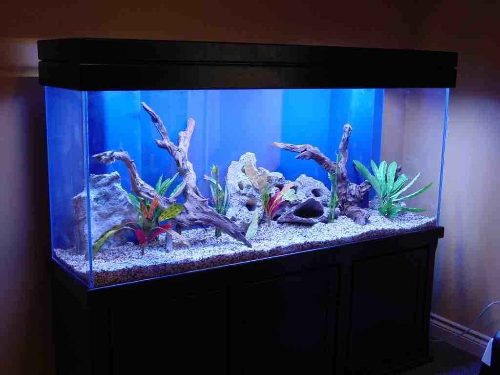 Freshwater Aquarium Decoration Ideas Decor Ideasdecor Ideas