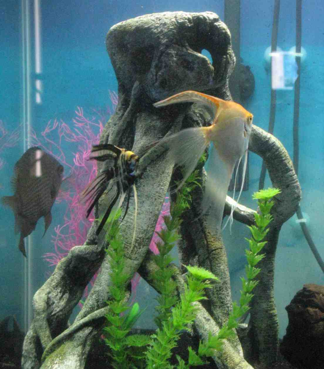 Top Fin Aquarium Decorations Decor Ideasdecor Ideas