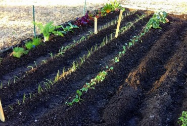 A Vegetable Gardening For Beginners