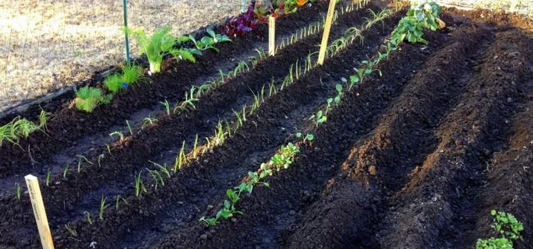 A Vegetable Gardening For Beginners