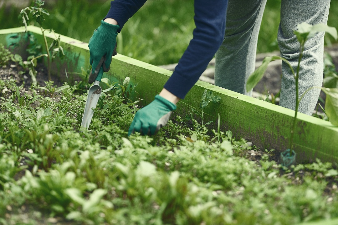 Everything You Need To Know To Start Your First Organic Garden