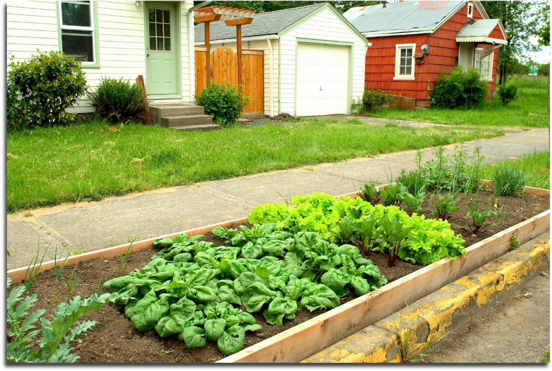 First Time Veggie Garden—Where To Start