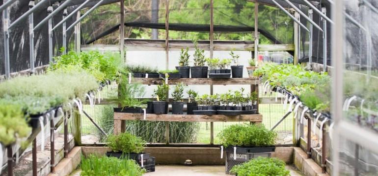 Gardening Start Small