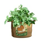 Burlap Grow Bags
