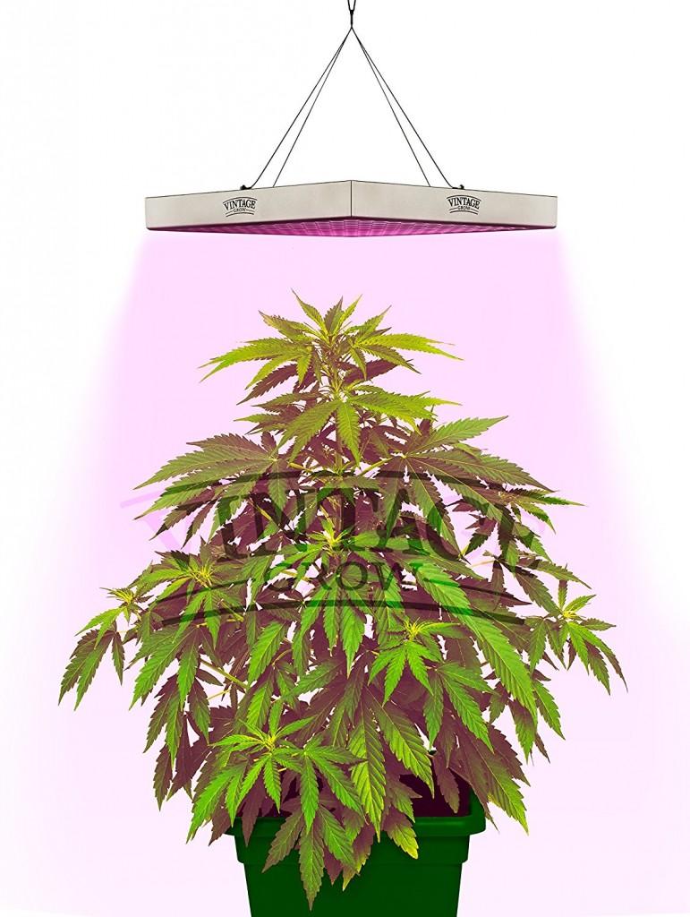 Growing Lamps