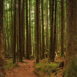12 Feet Wide By 8 Feet High. Prepasted Wallpaper High Quality Mural From A Photo Of A Hiking Trail